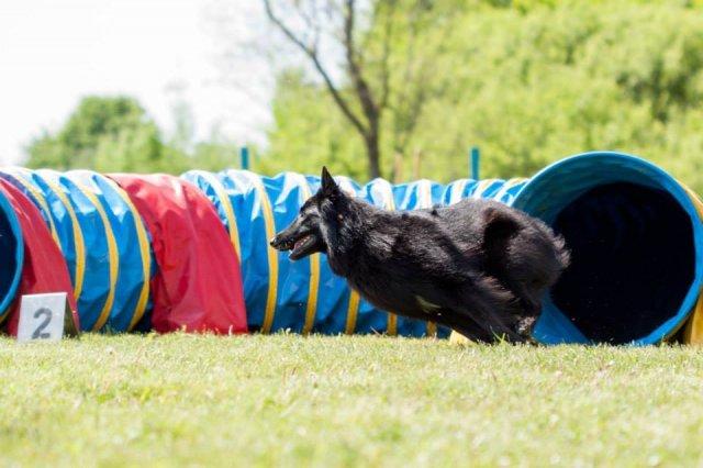 Šeštadienį Vingio parke vyks šunų varžybos