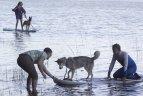 Irklenčių sezono atidarymo šventėje dalyvavo ir šunys